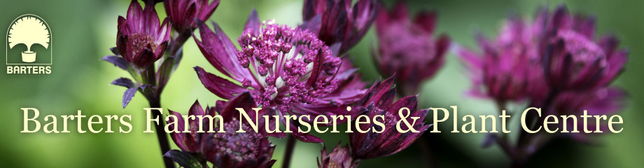 Barters Plant Centre and Nursery